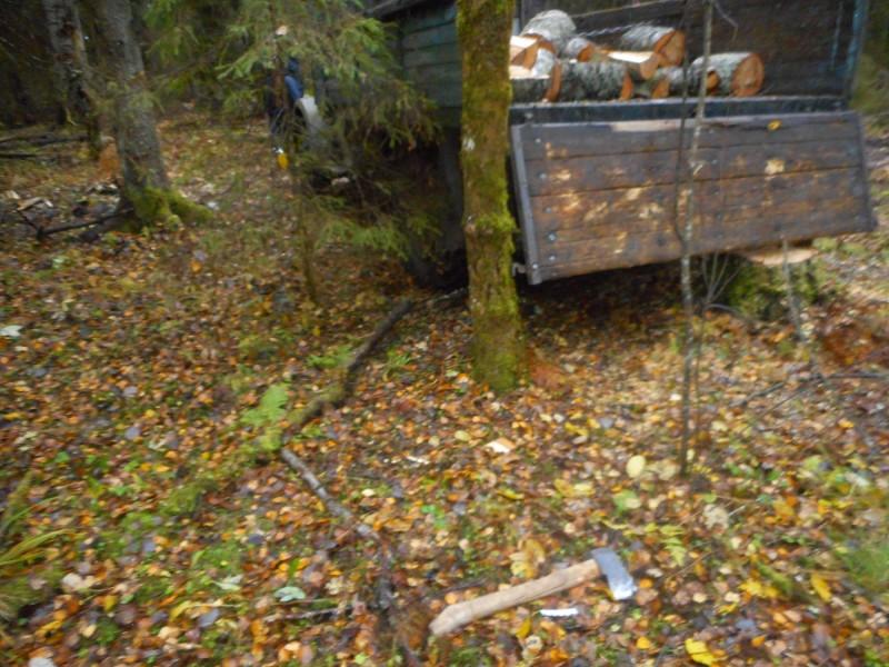 В Тверской области полицейские задержали подозреваемого в незаконной рубке деревьев