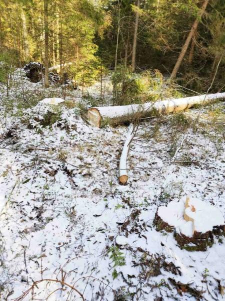 Жителя Ржева задержали за незаконную рубку леса