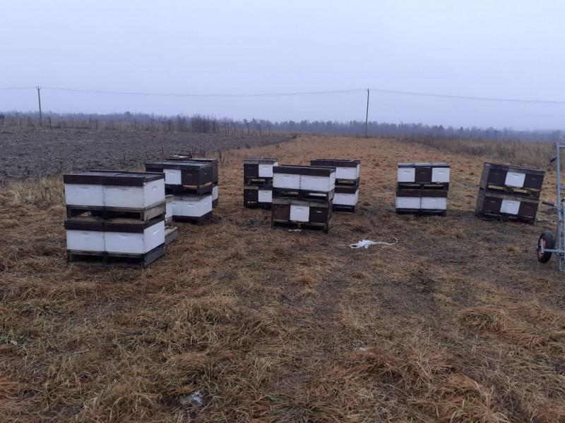Тверские полицейские раскрыли кражу пчелиных ульев
