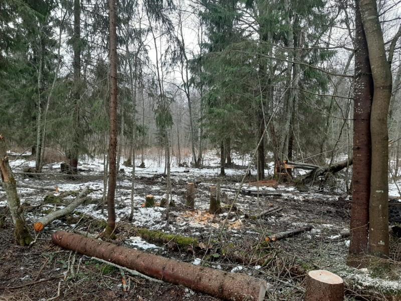 В Тверской области задержан подозреваемый в незаконной рубке леса
