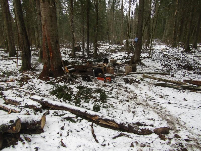 В Тверской области полицейскими выявлен факт незаконной рубки деревьев в особо крупном размере