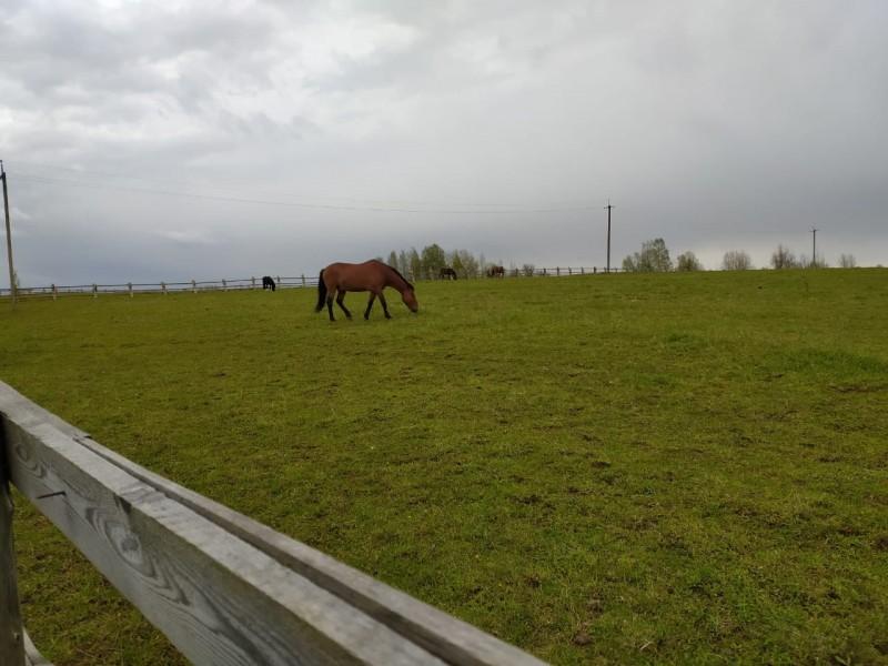 В Тверской области сотрудники полиции задержали подозреваемых в краже лошадей