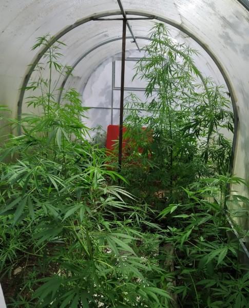 В Калининском районе полицейские пресекли культивирование наркосодержащих растений