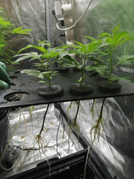 В Конаковском районе полицейскими установлен подозреваемый в незаконном хранении и культивировании наркосодержащих растений