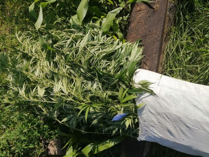 В Калининском районе полицейскими установлен подозреваемый в незаконном хранении и культивировании наркосодержащих растений