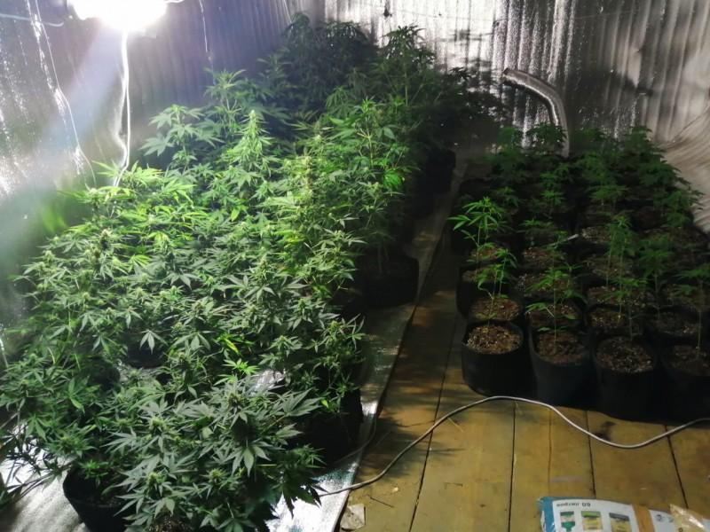 В Тверской области мужчина подозревается в незаконном обороте и культивировании растительного наркотика