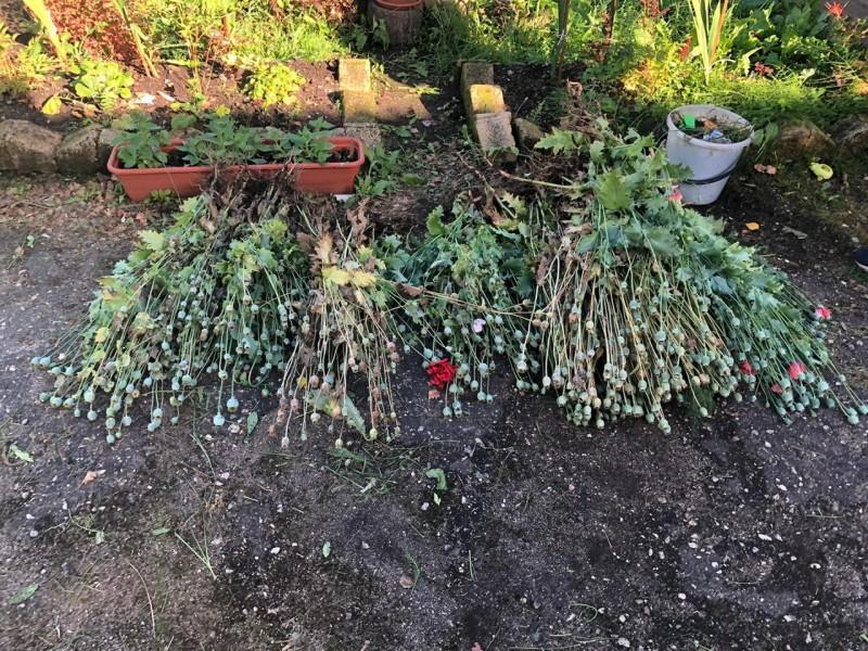 В Андреапольском районе полицейские пресекли культивирование наркосодержащих растений