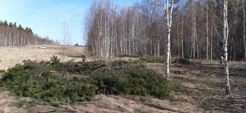 В Тверской области полицейские задержали подозреваемого в незаконной рубке леса