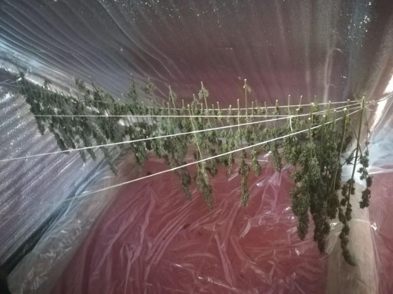 В Рамешковском районе полицейские задержали подозреваемого в незаконном хранении наркотиков