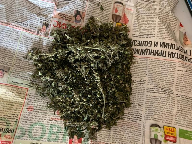 В Западнодвинском районе полицейские пресекли незаконное хранение наркосодержащих растений