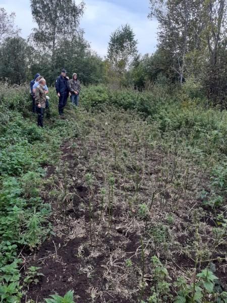 В Тверской области мужчина обвиняется в незаконном обороте и культивировании растительного наркотика