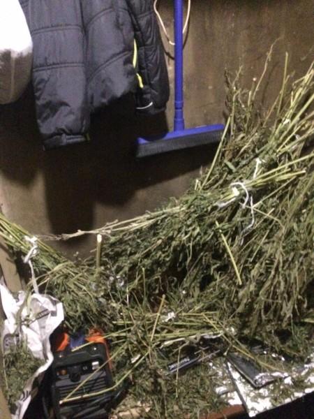 В Тверской области сотрудники полиции установили обстоятельства незаконного хранения наркотических средств растительного происхождения