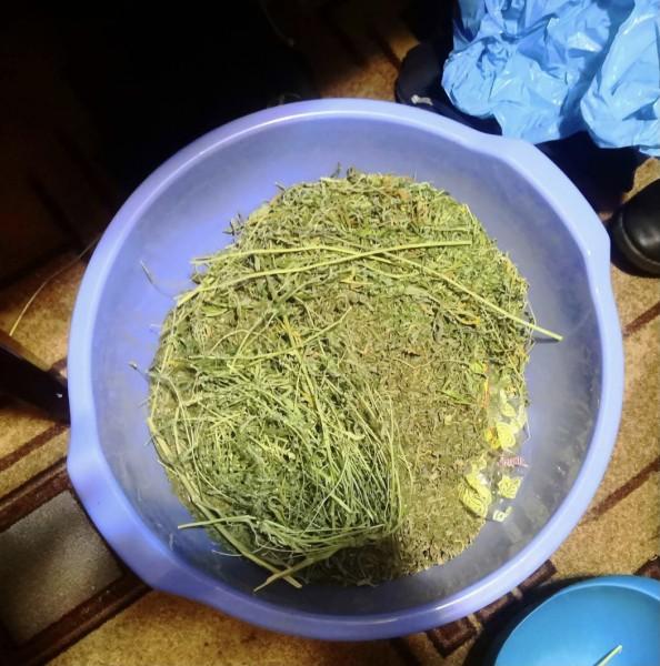 Полицейские Тверской области задержали подозреваемого в незаконном хранении частей наркосодержащих растений