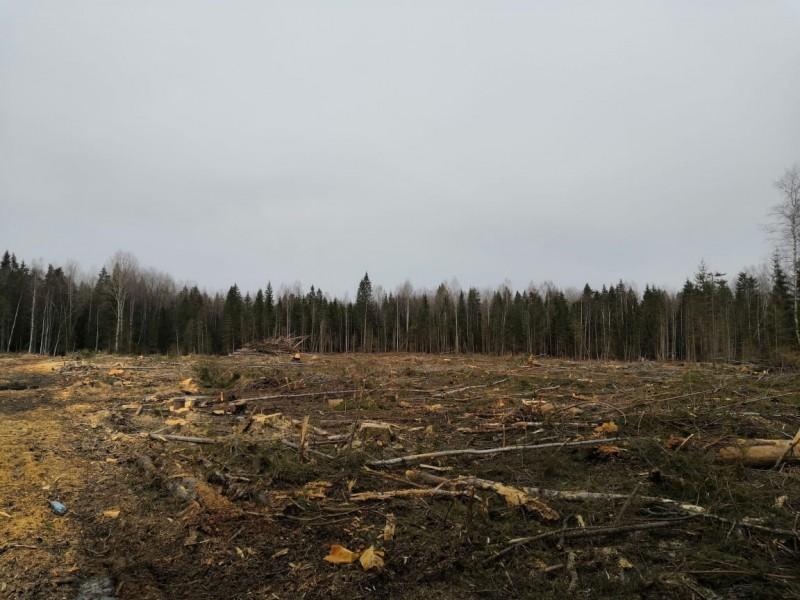 В Тверской области полицейские установили подозреваемого в незаконной рубке леса