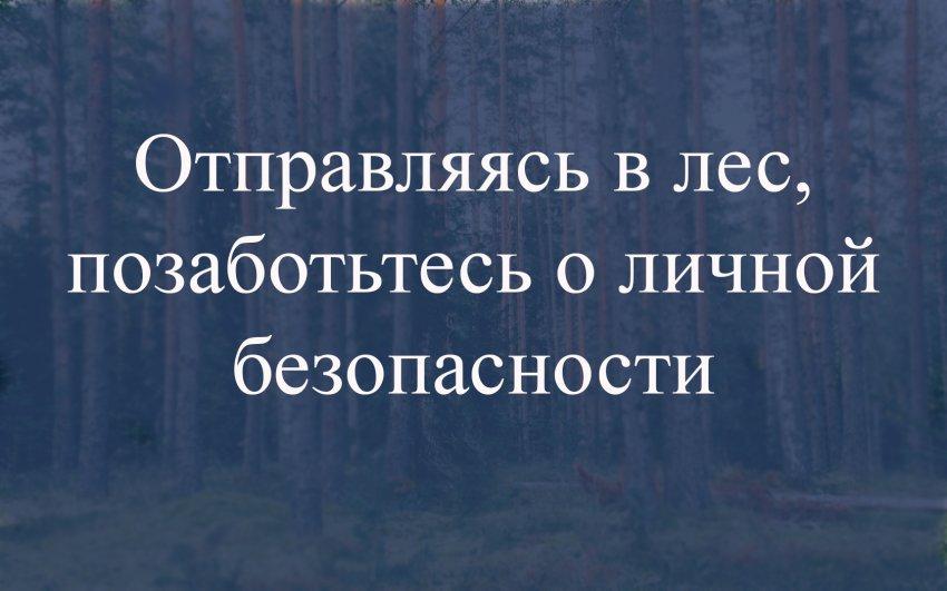 Полиция Тверской области напоминает: отправляясь в лес, позаботьтесь о личной безопасности