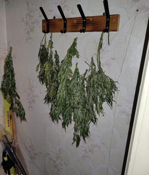 Сотрудники полиции изъяли у жителя Селижаровского района более 200 грамм наркосодержащего растения